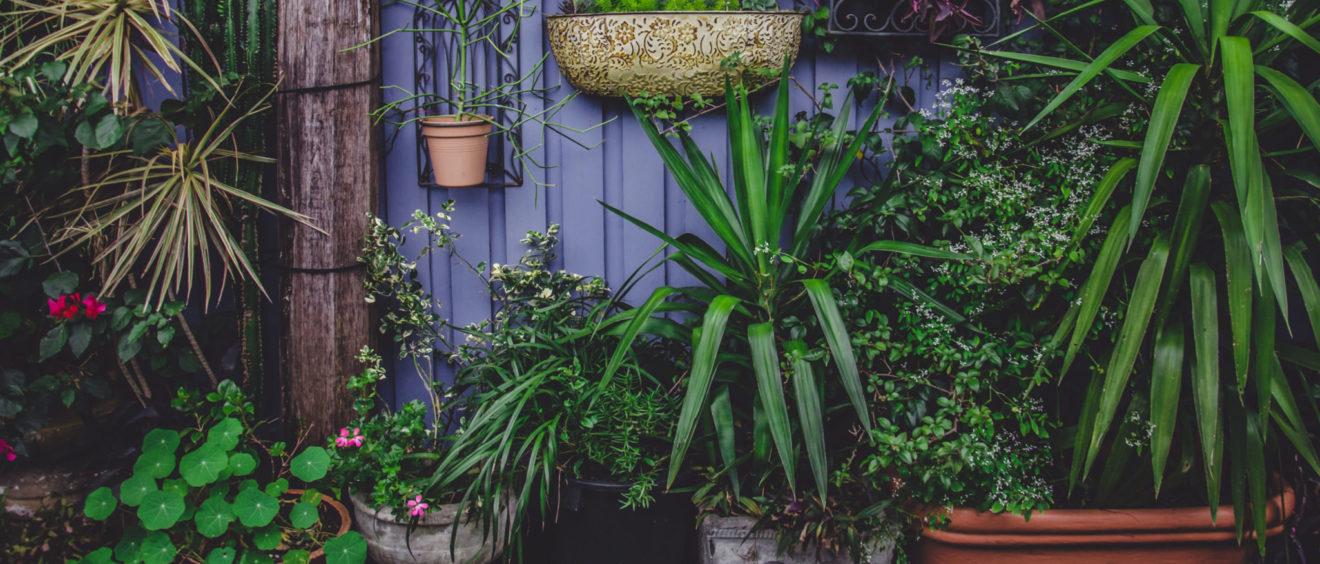 Decorbuddi, Garden design