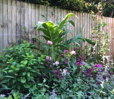 Decorbuddi_Garden_Designer_Putney