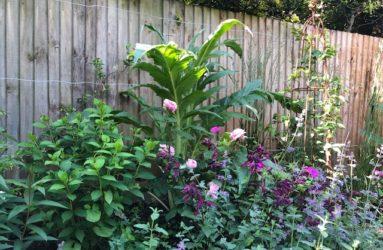 Decorbuddi_planting_plan